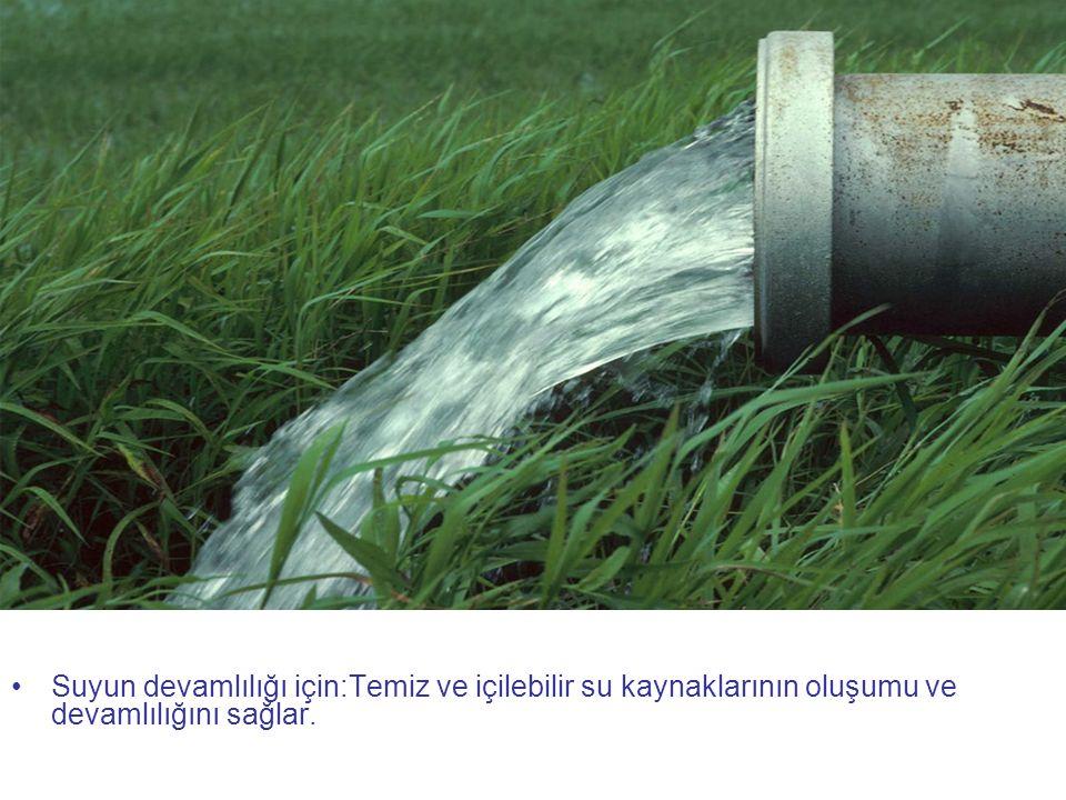 Suyun devamlılığı için:Temiz ve içilebilir su kaynaklarının oluşumu ve devamlılığını sağlar.