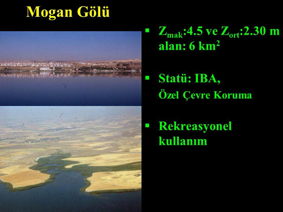 Mogan Gölü Zmak:4.5 ve Zort:2.30 m alan: 6 km2 Statü: IBA,