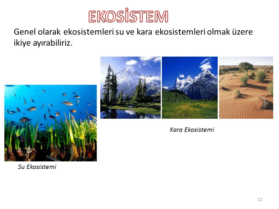 EKOSİSTEM Genel olarak ekosistemleri su ve kara ekosistemleri olmak üzere ikiye ayırabiliriz. Kara Ekosistemi.