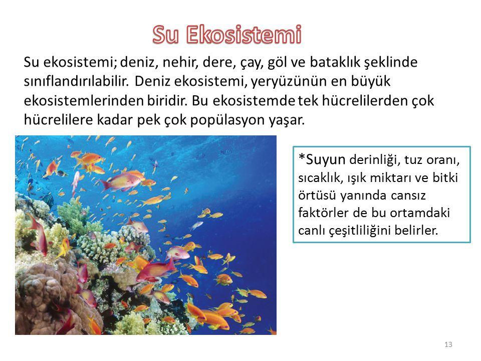 Su Ekosistemi