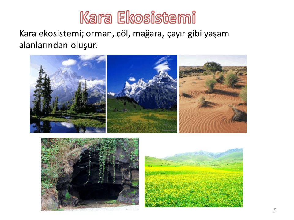 Kara Ekosistemi Kara ekosistemi; orman, çöl, mağara, çayır gibi yaşam alanlarından oluşur.