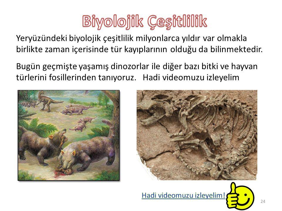 Biyolojik Çeşitlilik