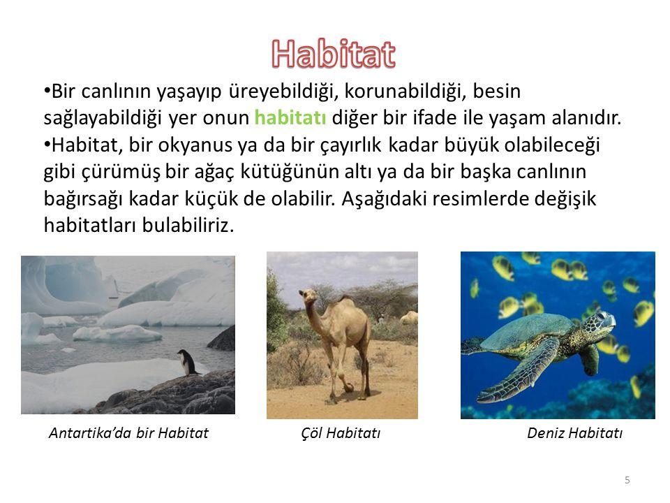Habitat Bir canlının yaşayıp üreyebildiği, korunabildiği, besin sağlayabildiği yer onun habitatı diğer bir ifade ile yaşam alanıdır.