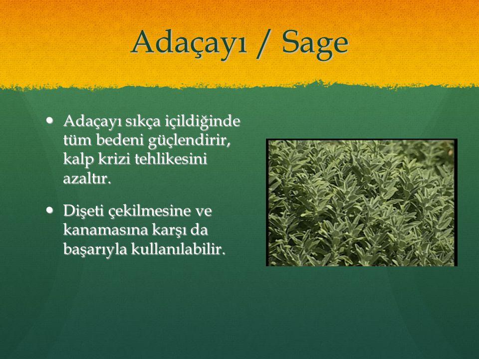 09/05/11 Adaçayı / Sage. Adaçayı sıkça içildiğinde tüm bedeni güçlendirir, kalp krizi tehlikesini azaltır.