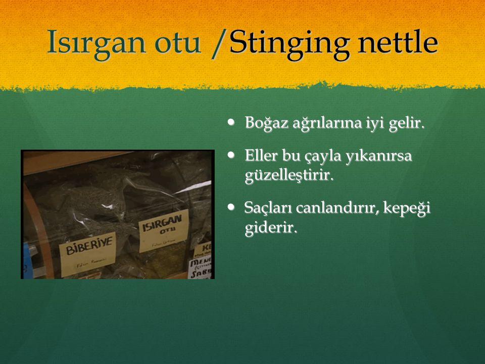 Isırgan otu /Stinging nettle