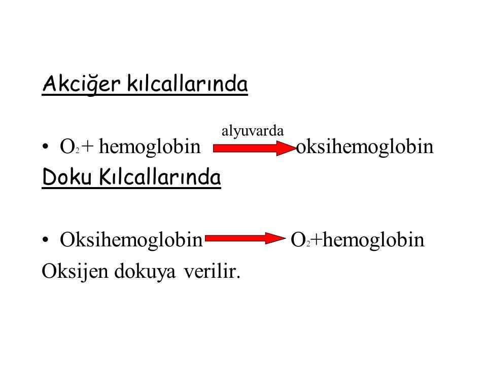 Akciğer kılcallarında O2 + hemoglobin oksihemoglobin
