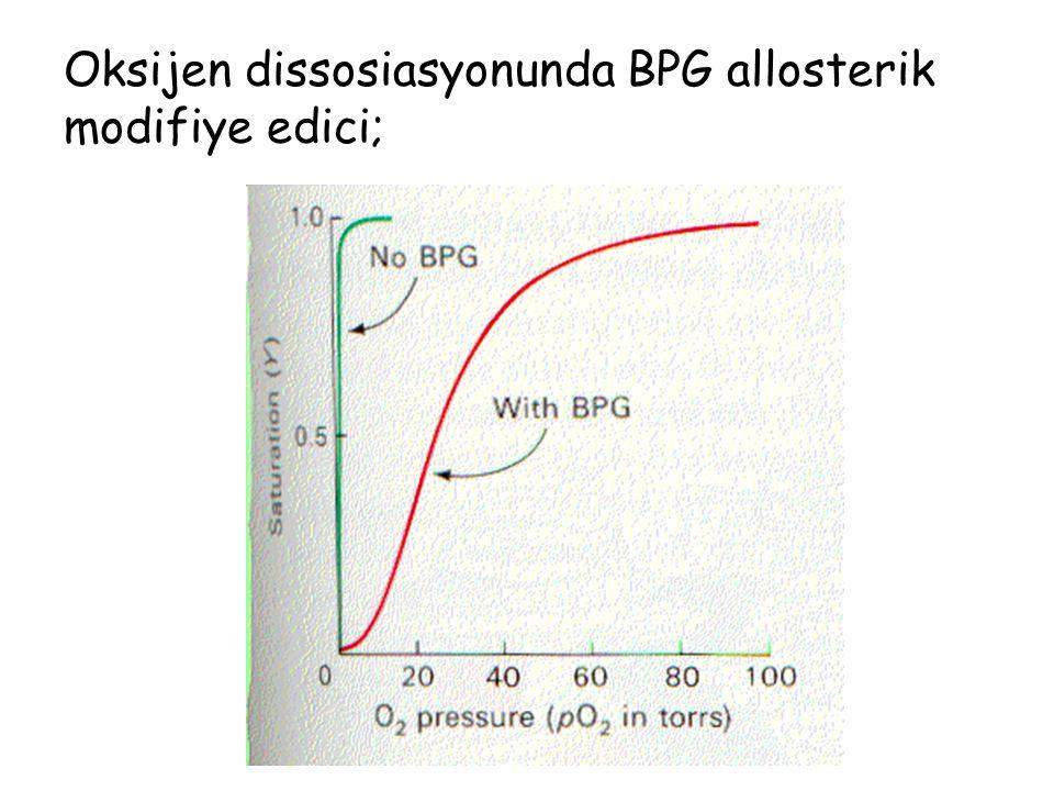 Oksijen dissosiasyonunda BPG allosterik modifiye edici;