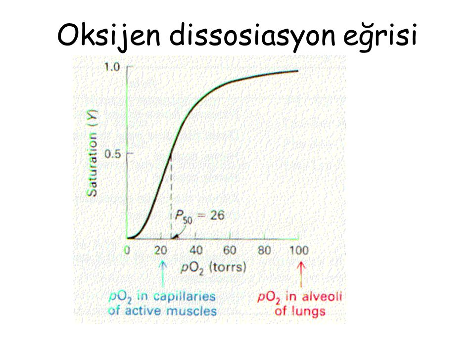 Oksijen dissosiasyon eğrisi