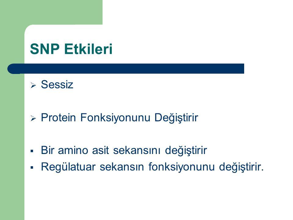 SNP Etkileri Sessiz Protein Fonksiyonunu Değiştirir