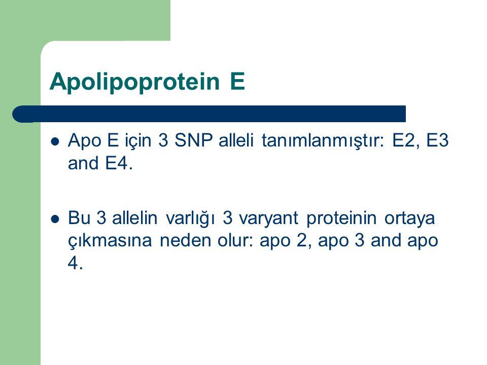 Apolipoprotein E Apo E için 3 SNP alleli tanımlanmıştır: E2, E3 and E4.