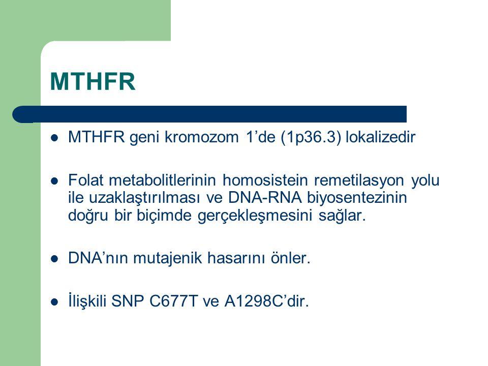 MTHFR MTHFR geni kromozom 1'de (1p36.3) lokalizedir