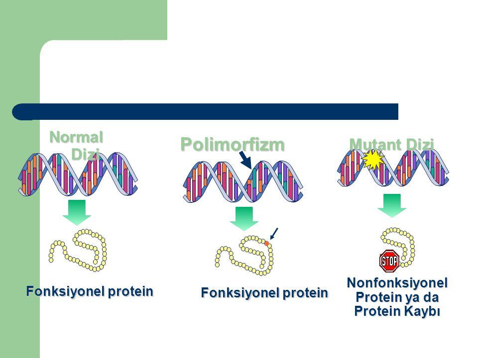 Nonfonksiyonel Protein ya da