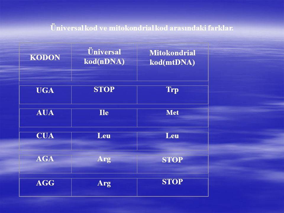 Üniversal kod ve mitokondrial kod arasındaki farklar.