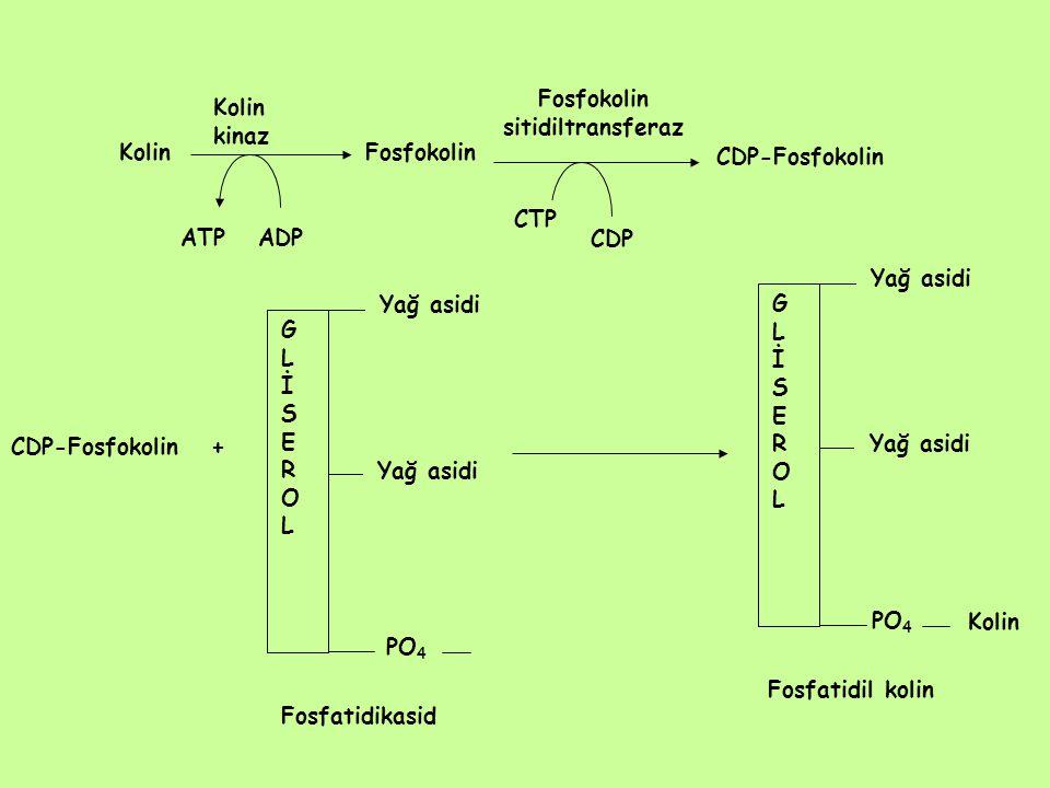 Fosfokolin sitidiltransferaz