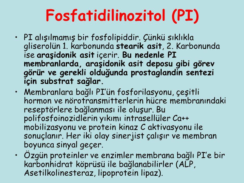Fosfatidilinozitol (PI)