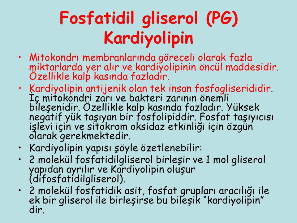 Fosfatidil gliserol (PG) Kardiyolipin