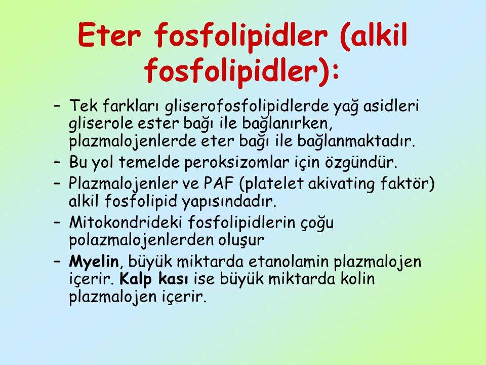 Eter fosfolipidler (alkil fosfolipidler):