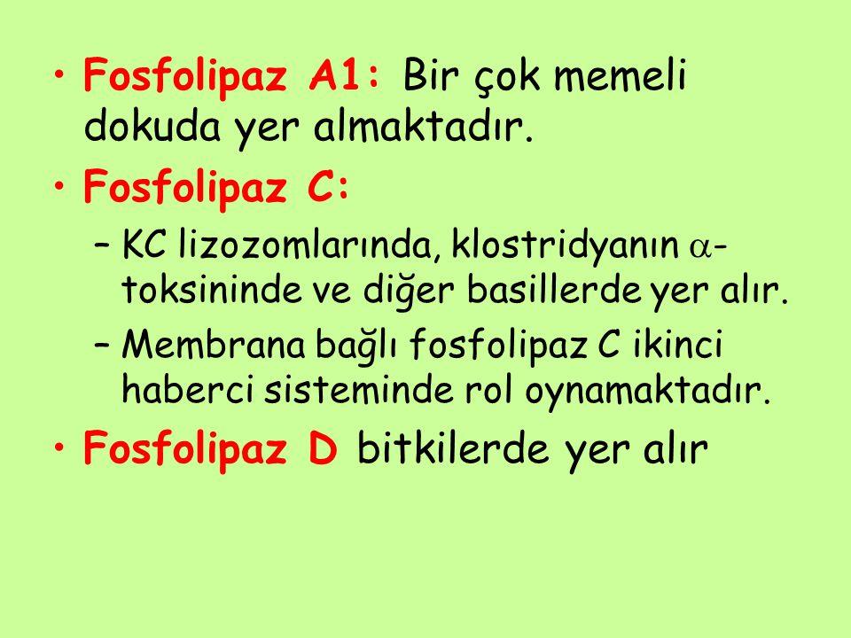 Fosfolipaz A1: Bir çok memeli dokuda yer almaktadır. Fosfolipaz C: