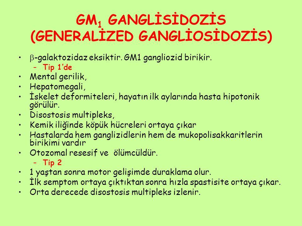 GM1 GANGLİSİDOZİS (GENERALİZED GANGLİOSİDOZİS)