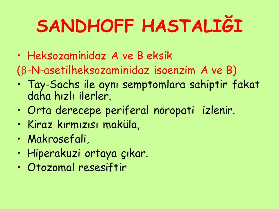 SANDHOFF HASTALIĞI Heksozaminidaz A ve B eksik