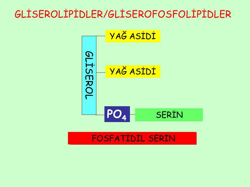 PO4 GLİSEROLİPİDLER/GLİSEROFOSFOLİPİDLER GLİSEROL YAĞ ASİDİ YAĞ ASİDİ