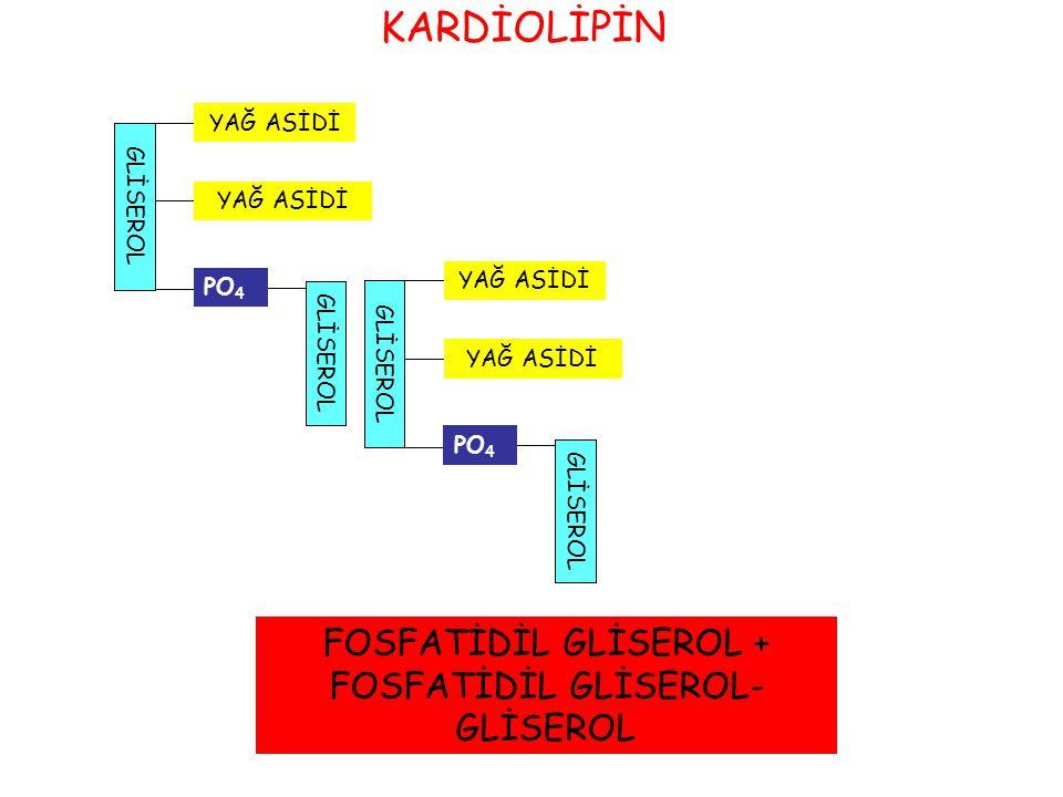 FOSFATİDİL GLİSEROL + FOSFATİDİL GLİSEROL-GLİSEROL