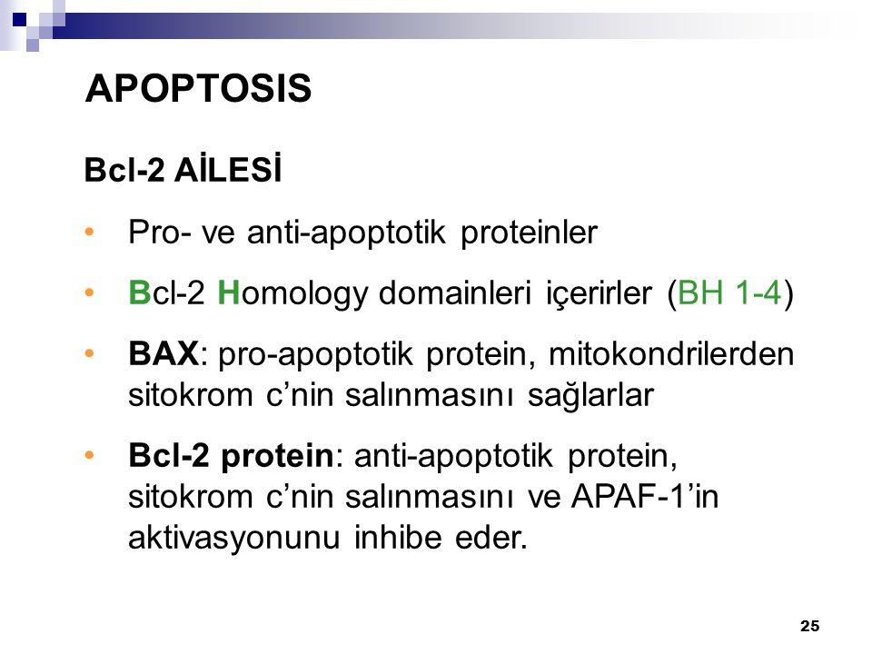 APOPTOSIS Bcl-2 AİLESİ Pro- ve anti-apoptotik proteinler