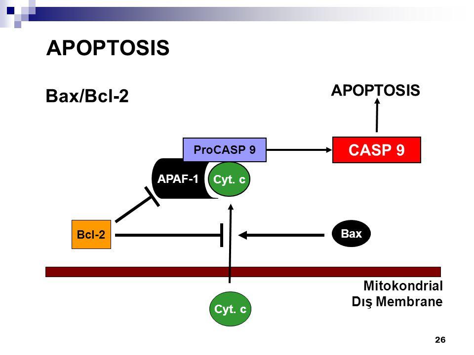APOPTOSIS Bax/Bcl-2 APOPTOSIS CASP 9 Mitokondrial Dış Membrane