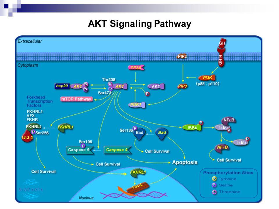 AKT Signaling Pathway