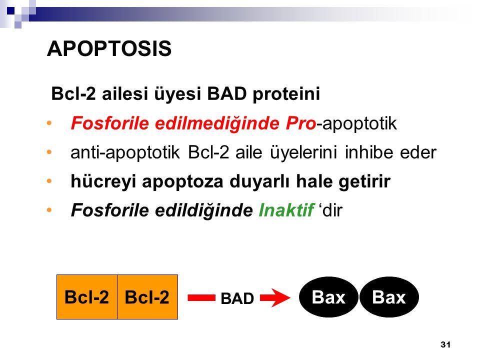 APOPTOSIS Bcl-2 ailesi üyesi BAD proteini