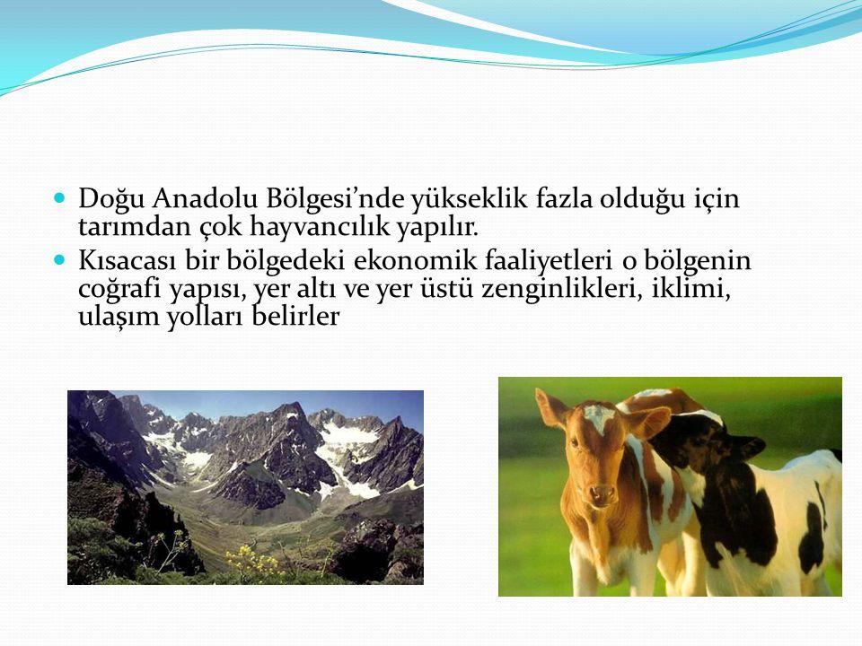 Doğu Anadolu Bölgesi'nde yükseklik fazla olduğu için tarımdan çok hayvancılık yapılır.