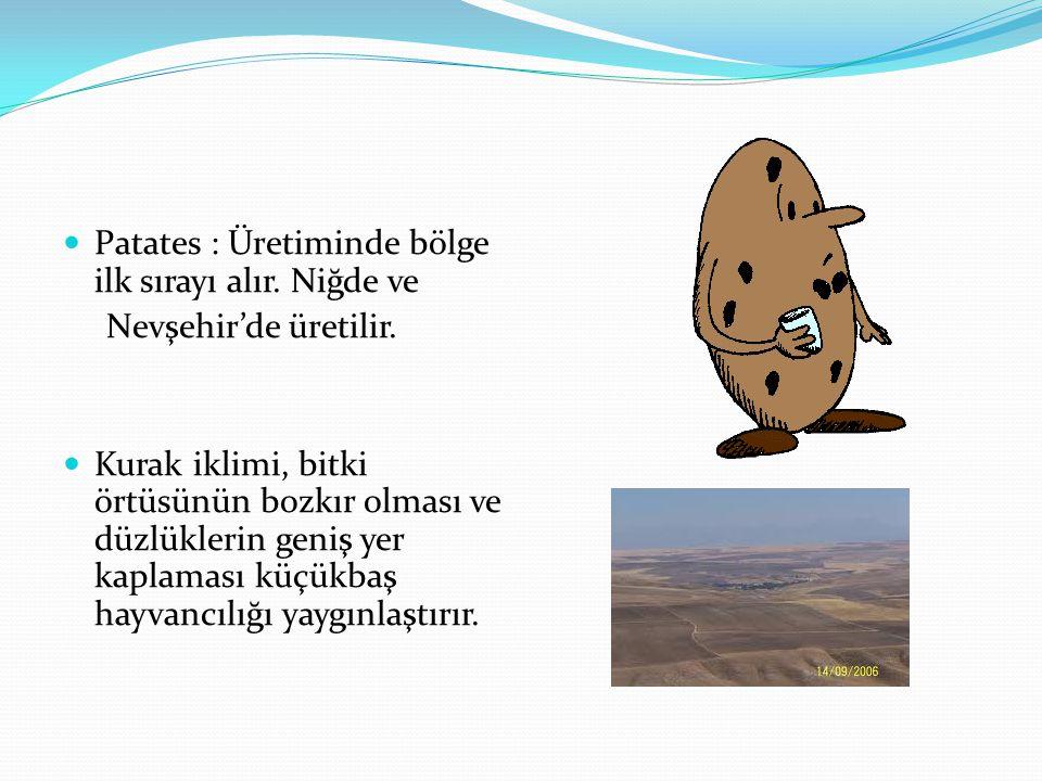 Patates : Üretiminde bölge ilk sırayı alır. Niğde ve