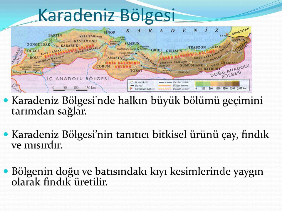 Karadeniz Bölgesi Karadeniz Bölgesi nde halkın büyük bölümü geçimini tarımdan sağlar.
