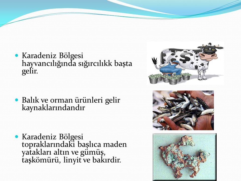 Karadeniz Bölgesi hayvancılığında sığırcılıkk başta gelir.
