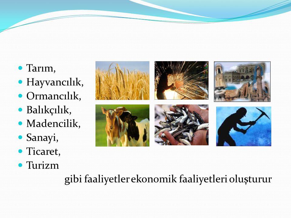 Tarım, Hayvancılık, Ormancılık, Balıkçılık, Madencilik, Sanayi, Ticaret, Turizm.