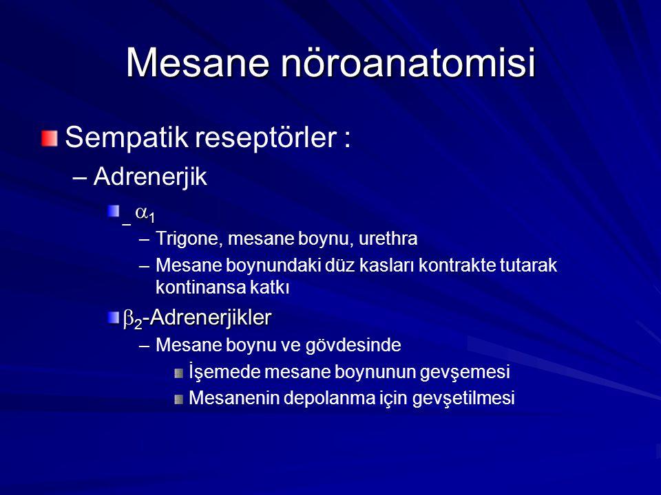Mesane nöroanatomisi Sempatik reseptörler : Adrenerjik _ 1