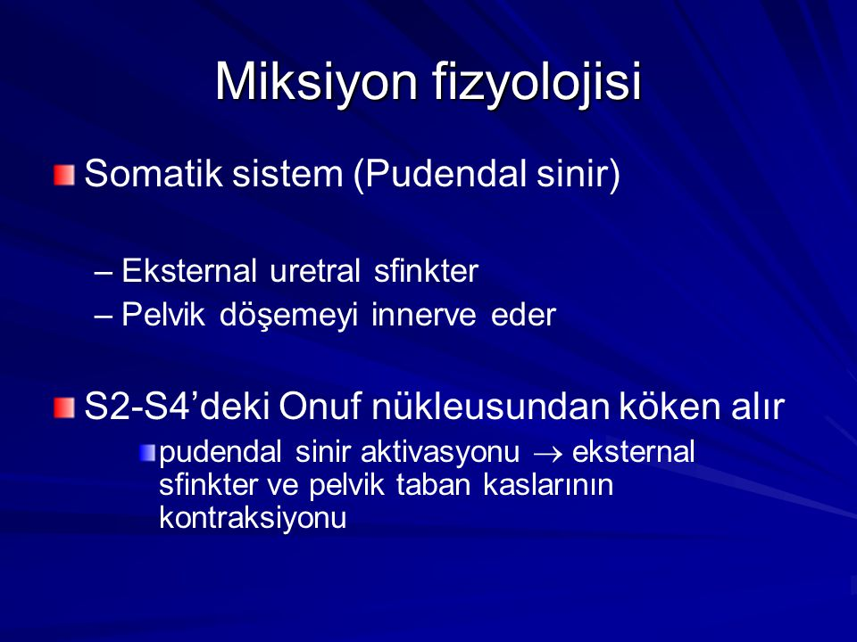 Miksiyon fizyolojisi Somatik sistem (Pudendal sinir)
