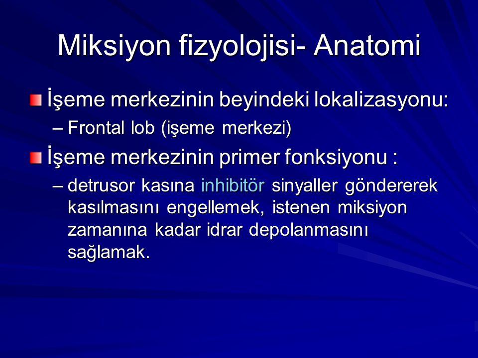Miksiyon fizyolojisi- Anatomi