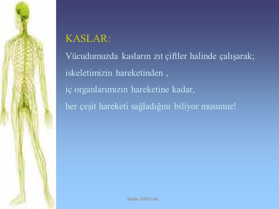 KASLAR: Vücudumuzda kasların zıt çiftler halinde çalışarak;