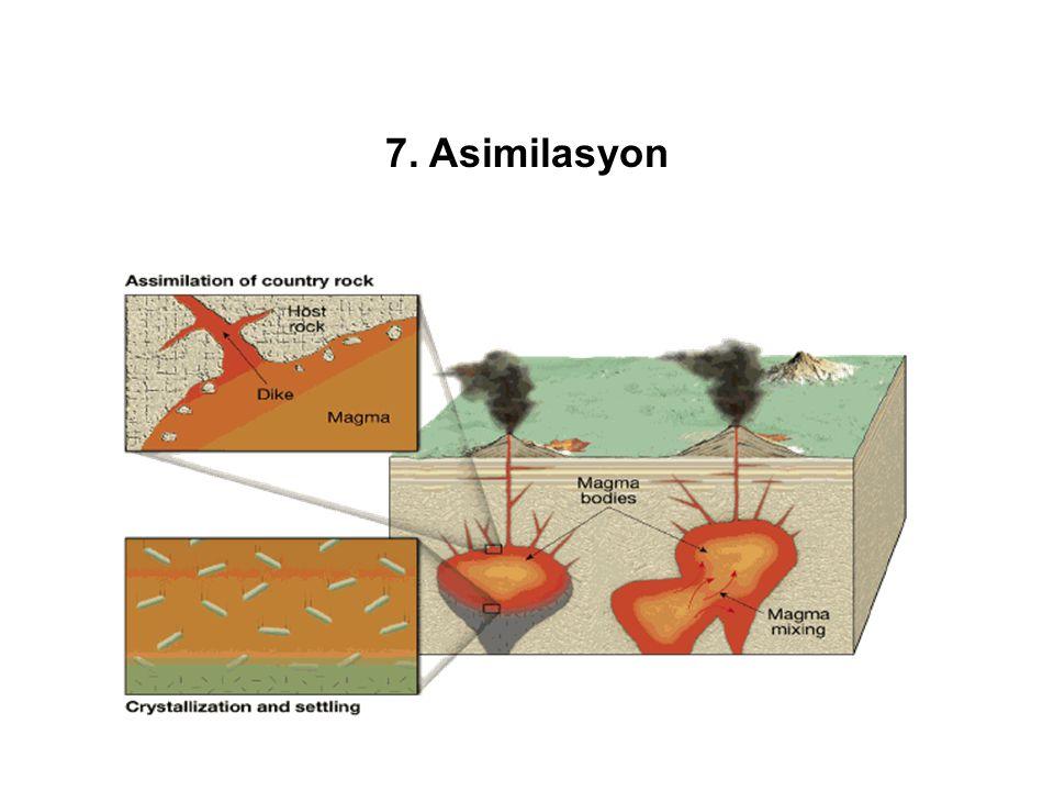 7. Asimilasyon
