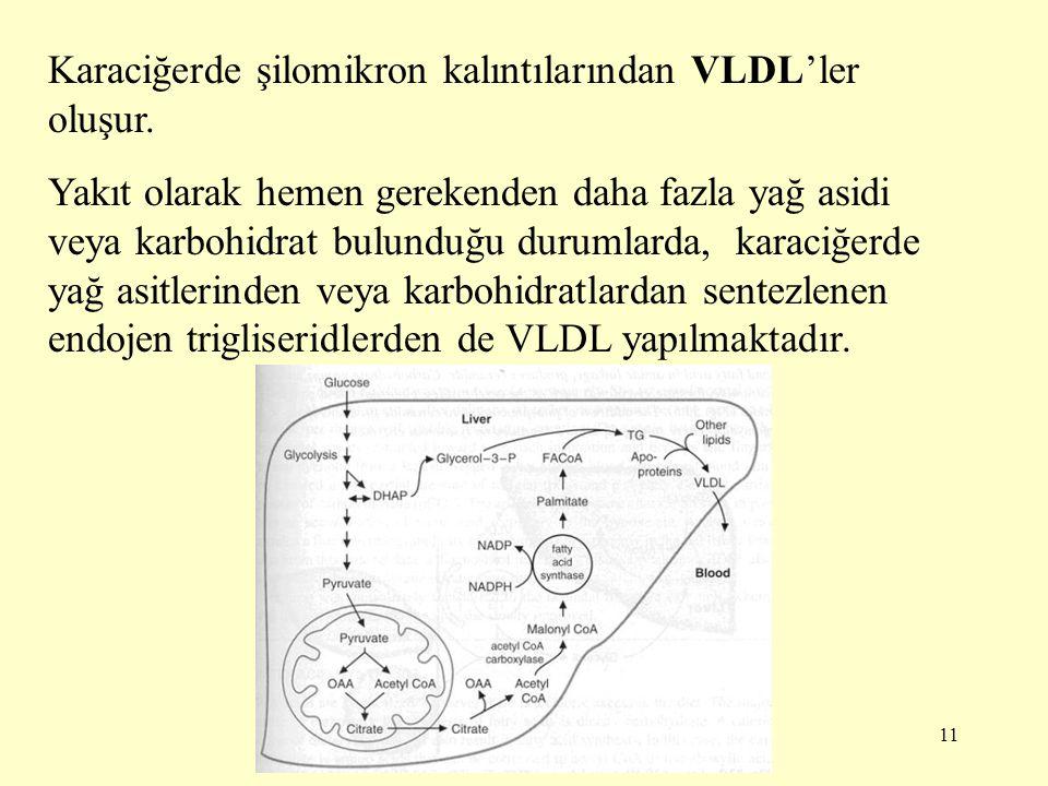 Karaciğerde şilomikron kalıntılarından VLDL'ler oluşur.