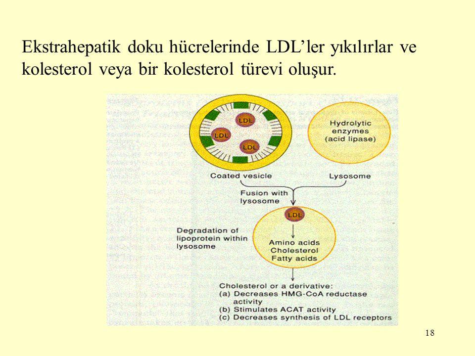 Ekstrahepatik doku hücrelerinde LDL'ler yıkılırlar ve kolesterol veya bir kolesterol türevi oluşur.