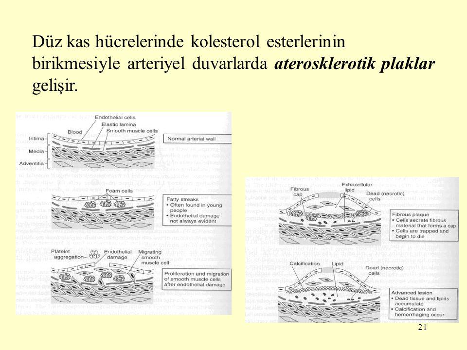 Düz kas hücrelerinde kolesterol esterlerinin birikmesiyle arteriyel duvarlarda aterosklerotik plaklar gelişir.