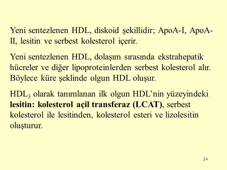 Yeni sentezlenen HDL, diskoid şekillidir; ApoA-I, ApoA-II, lesitin ve serbest kolesterol içerir.