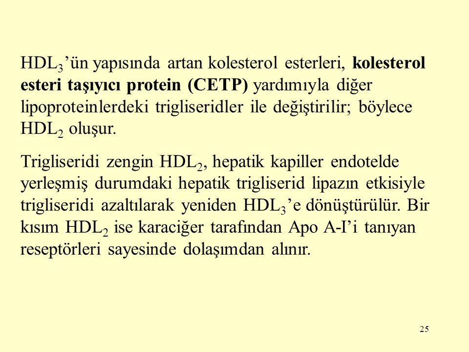 HDL3'ün yapısında artan kolesterol esterleri, kolesterol esteri taşıyıcı protein (CETP) yardımıyla diğer lipoproteinlerdeki trigliseridler ile değiştirilir; böylece HDL2 oluşur.