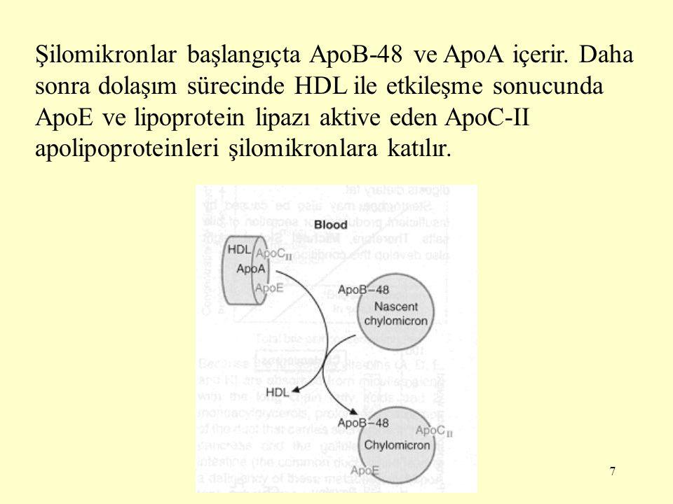 Şilomikronlar başlangıçta ApoB-48 ve ApoA içerir