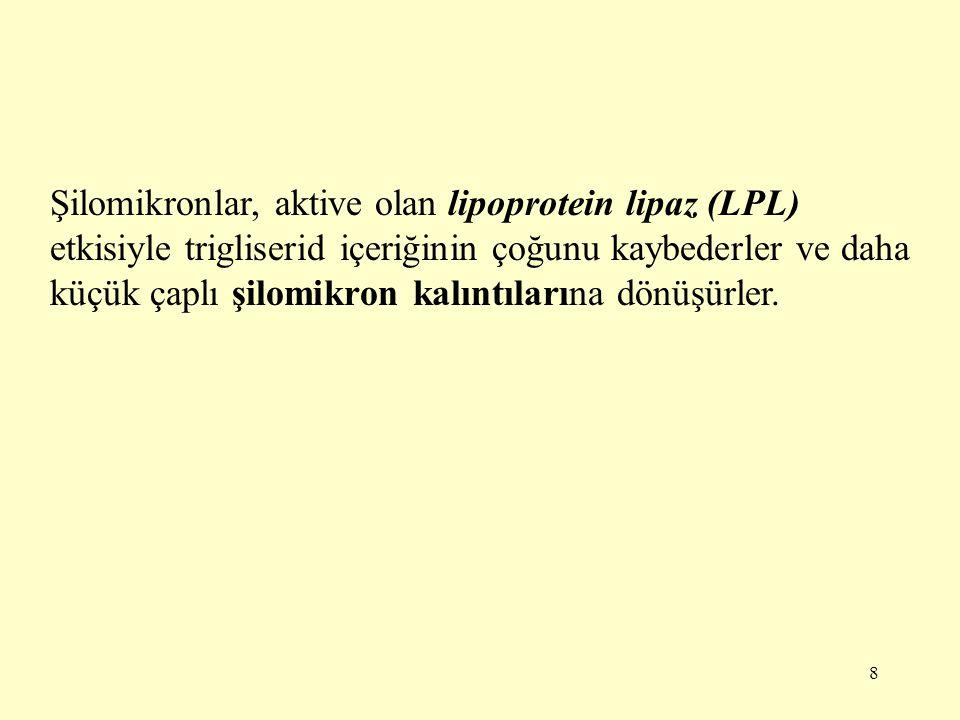 Şilomikronlar, aktive olan lipoprotein lipaz (LPL) etkisiyle trigliserid içeriğinin çoğunu kaybederler ve daha küçük çaplı şilomikron kalıntılarına dönüşürler.