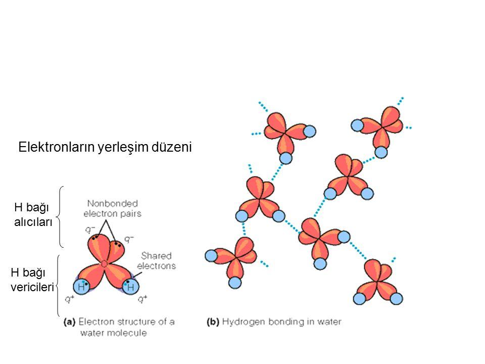 Elektronların yerleşim düzeni