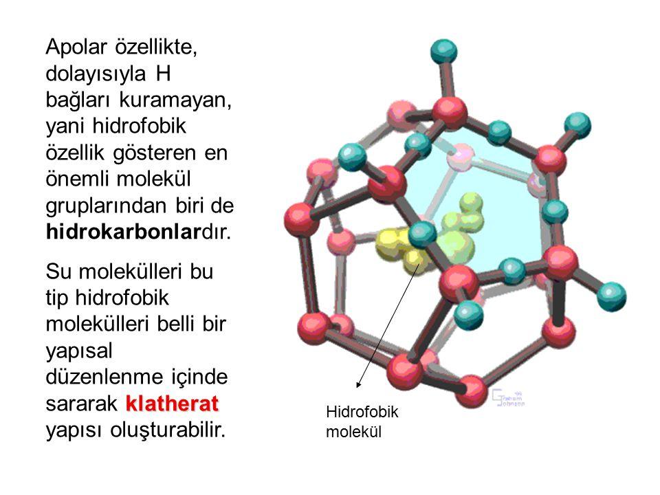 Apolar özellikte, dolayısıyla H bağları kuramayan, yani hidrofobik özellik gösteren en önemli molekül gruplarından biri de hidrokarbonlardır.