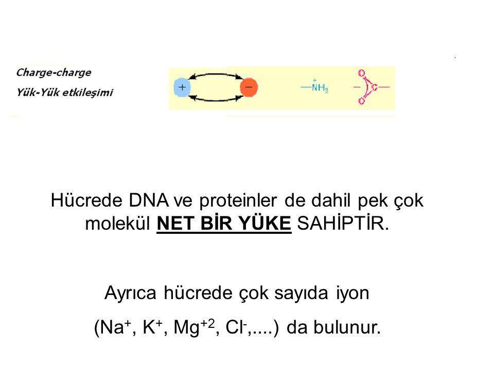 Ayrıca hücrede çok sayıda iyon (Na+, K+, Mg+2, Cl-,....) da bulunur.